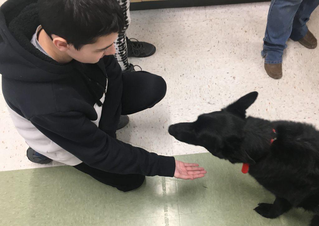 Student kneeling, reaching toward dog